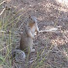 A curious Squirrel at The Grand Canyon. by MissKat77