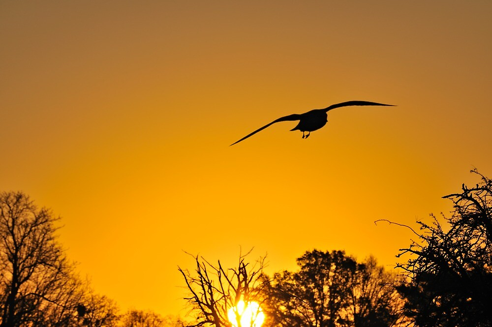 Flying by Kasia Nowak