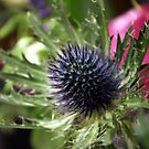 Thistle detail by Mark Smitham