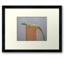 American Anole Basking Framed Print
