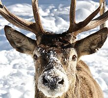Frosted Snout by Heather King