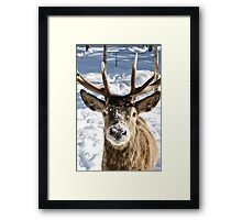 Frosted Snout Framed Print