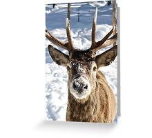 Frosted Snout Greeting Card
