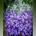 Splash of Purple - Canterbury Bells by MidnightMelody