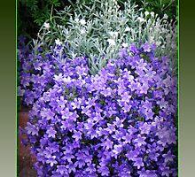 Splash of Purple - Canterbury Bells by MidnightMelody