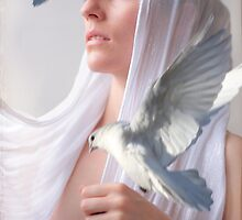 White Dove1 by Elyn