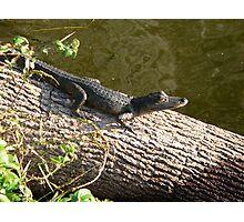 Little Baby Gator Photographic Print