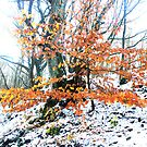Russet foliage against snow by Mark Smitham