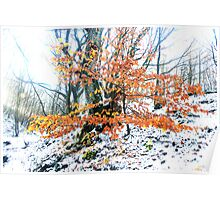Russet foliage against snow Poster