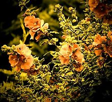 Glowing Flowers by Steph Etheridge