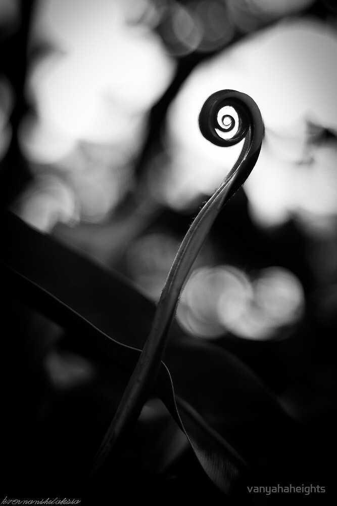 Emergence - Leaf Curl Grayscale by vanyahaheights