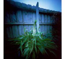 Backyard plant - pinhole by Malcolm Garth