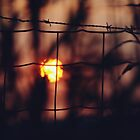 Fenced sunset by heinrich