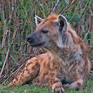 Laughing Hyena by by Marvil LaCroix
