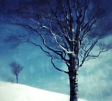 The Winter Tree by kibishipaul