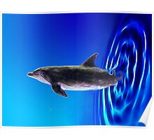 Dolphin Zoom Poster