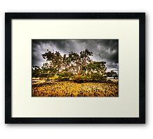 Mangrove Beach Framed Print
