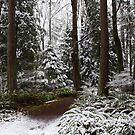 Winter by Olga Zvereva