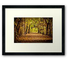 High Elms Woodland walk Framed Print