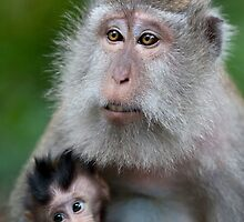 Mother and Child by Houndstooth