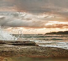 Jenny Dixon Beach - Panorama by Tam  Locke