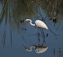 Intermediate Egret by Lance Leopold