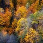 Autumn appearance by Patrick Morand