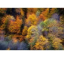 Autumn appearance Photographic Print