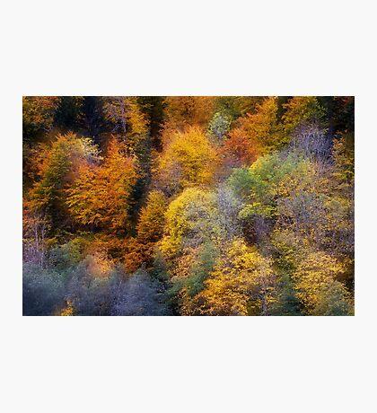 Autumn appearance Photographic Print