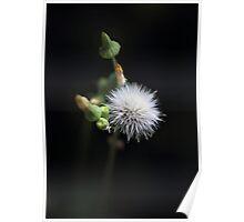 The Dandelion Fairy Poster