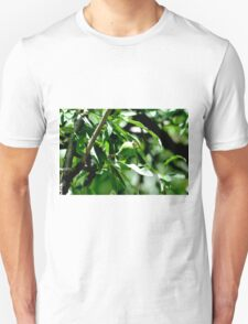 Pear on willow T-Shirt