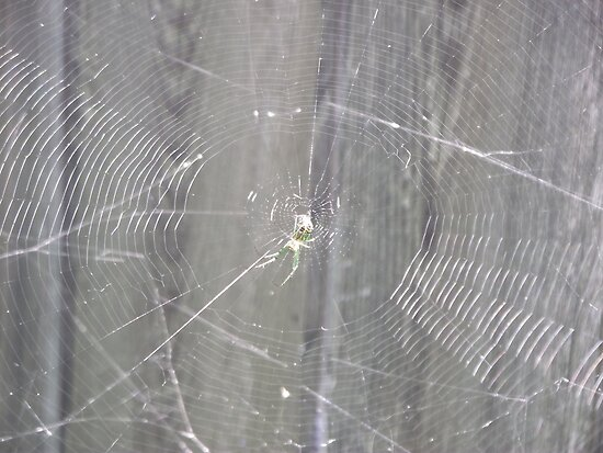 Spider with Web by Sinclere