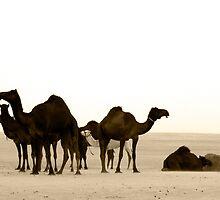 Camel in Abu Dhabi camel market  by sylvianik