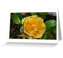 yellow rose greeting card Greeting Card
