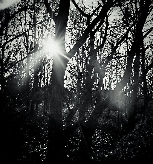 Out of the Dark by Richard Pitman