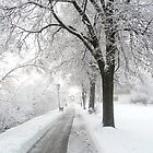 Park view in winter. by sandyprints