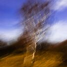 The Dizzy Tree by Kofoed