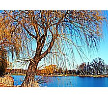 Weeping Willow © Photographic Print