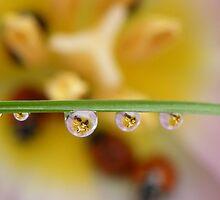 A drop of ladybirds by Yool