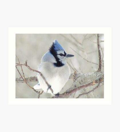 Blue Jay Profile Art Print