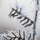 Frozen Bracken 2 by Kasia Nowak