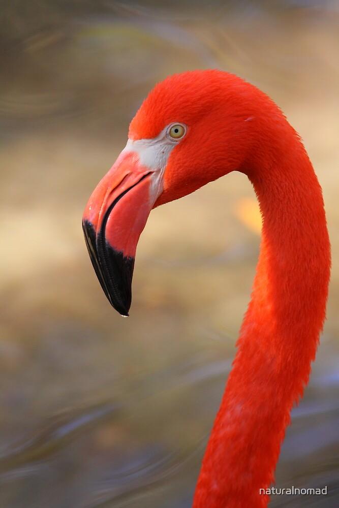Flamingo Profile by naturalnomad