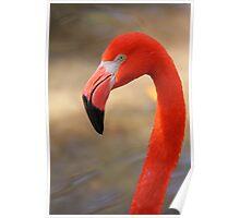 Flamingo Profile Poster