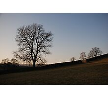 Nidderdale in the afternoon sunset Photographic Print