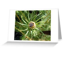 Leucadendron - Jubilee Crown - Laurel Yellow  Greeting Card