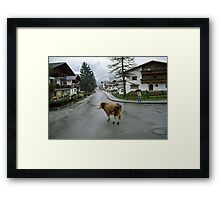 Lost cow, Austria, 1980s. Framed Print