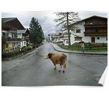 Lost cow, Austria, 1980s. Poster
