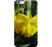 Nodding Daffodils iPhone Case/Skin