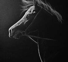 """""""The Softest Light"""" - Kathiawari Mare by SD 2010 Photography & Equine Art Creations"""