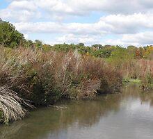 Ohio Wetlands by Monnie Ryan